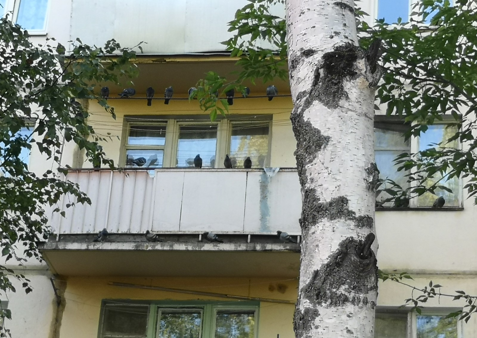 Een Winters Balkon : Голуби оккупировали чей то балкон