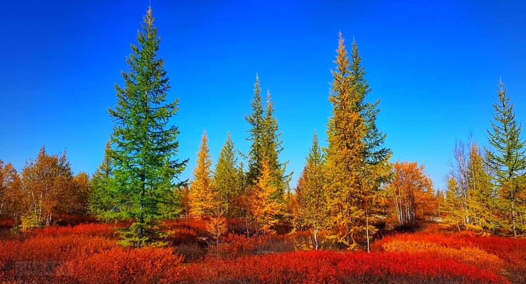 Картинки по запросу фото осень севера