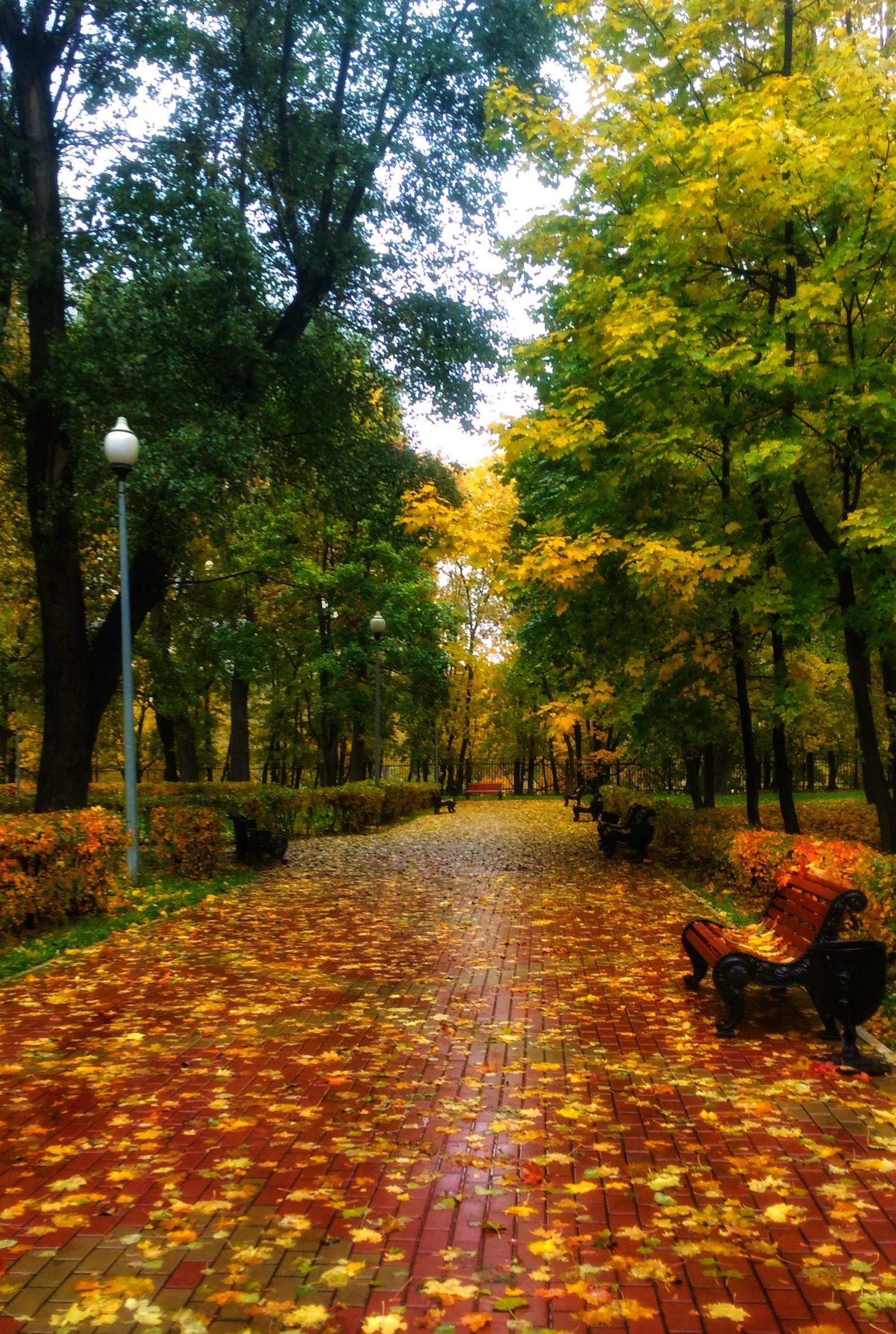 Краски осени, где то в Москве | Пикабу