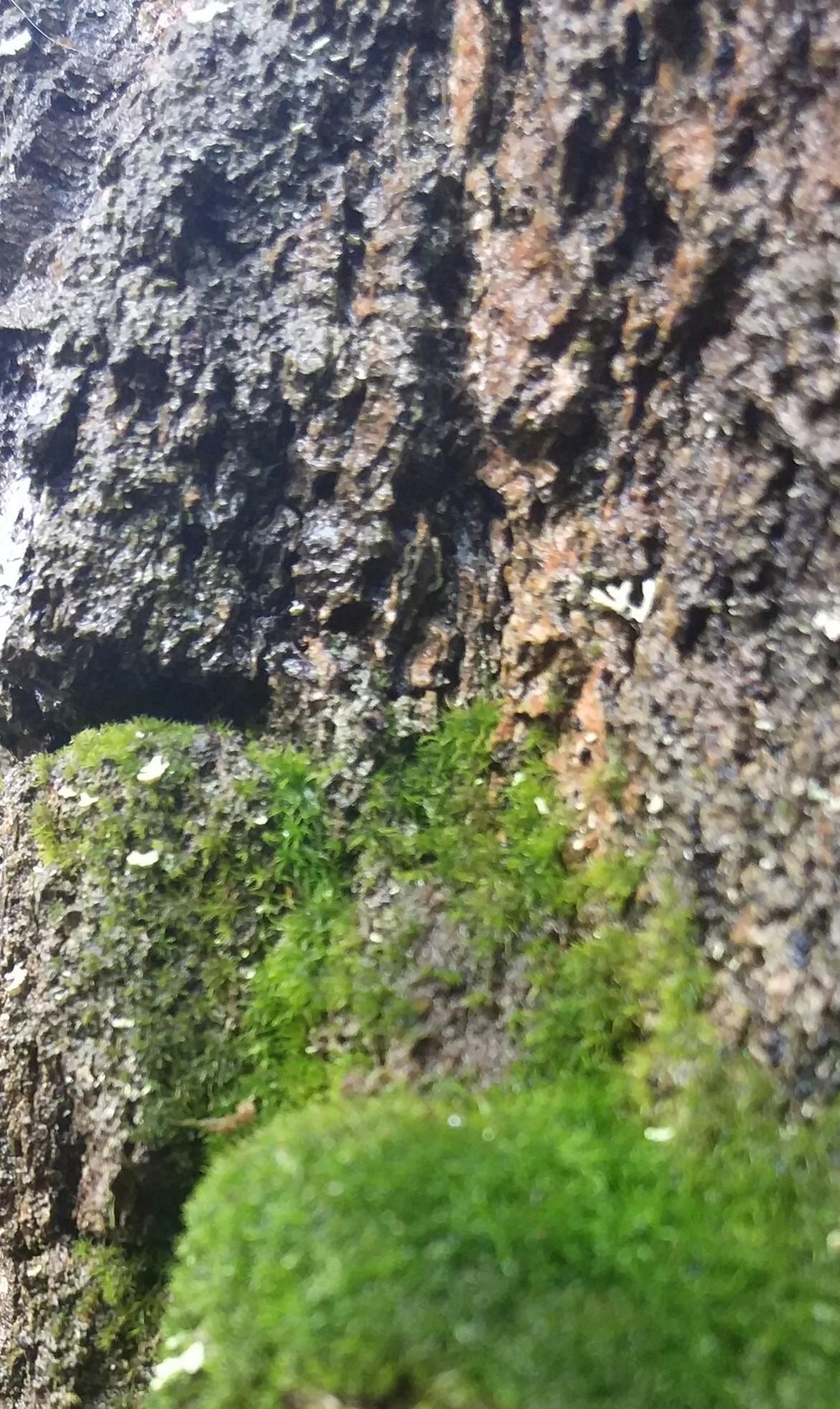 Фотообои 3D природа, горы 368х254 см Пещера в лесу (5078WG), цена ... | 1964x1171