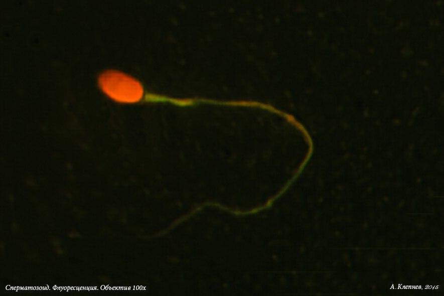 parni-i-spermatozoidi-prinudili-siloy-sosat