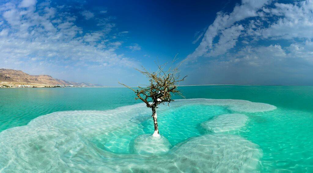 Одинокое дерево в мертвом море. | Пикабу