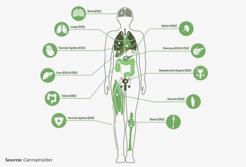 Марихуана химический состав последствия легализации марихуаны в сша