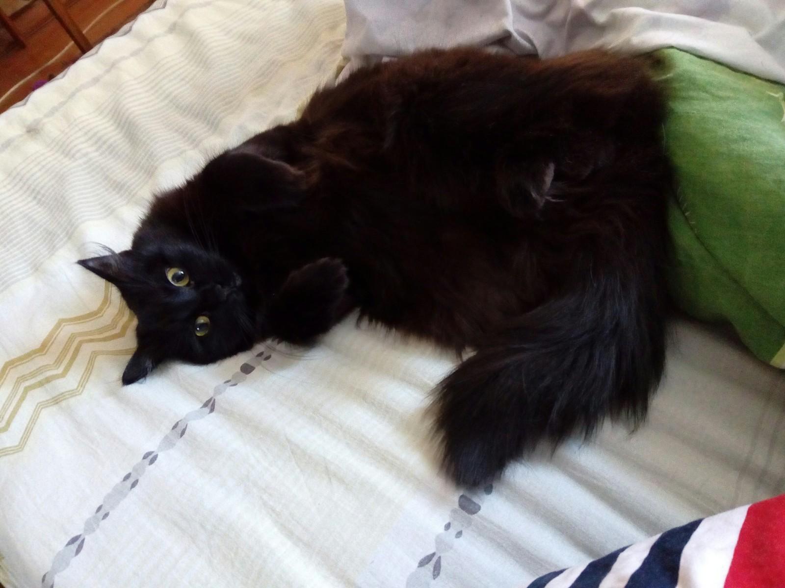 Обои Соня, спит, лапки, Кошка. Кошки foto 17