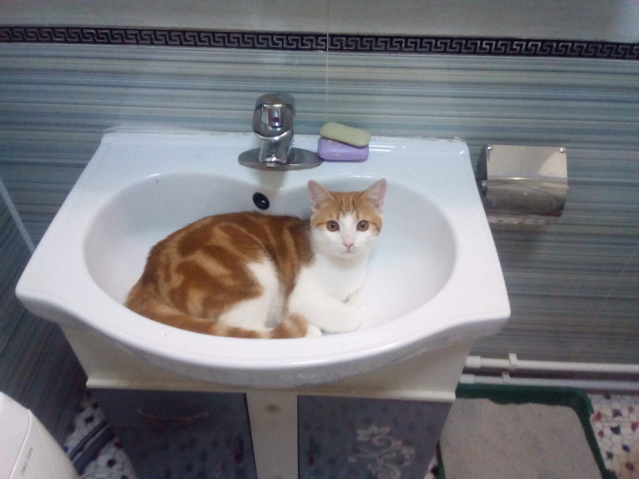 у кастрированного кота выделения ростов на дону