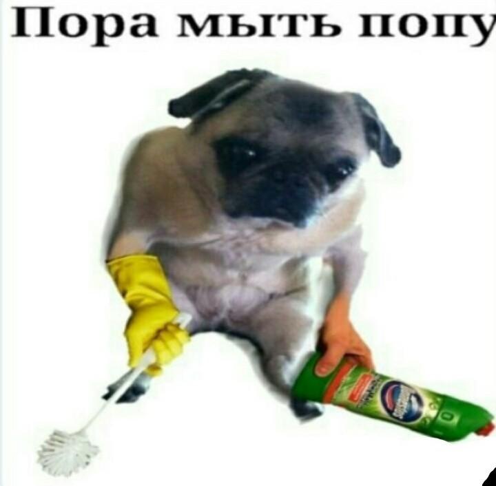 Мыли Попку