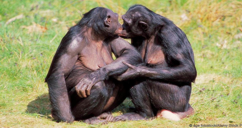 Гомосексуальність та еволюція