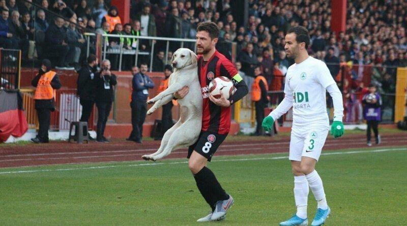 Команды на немецком собак футбол