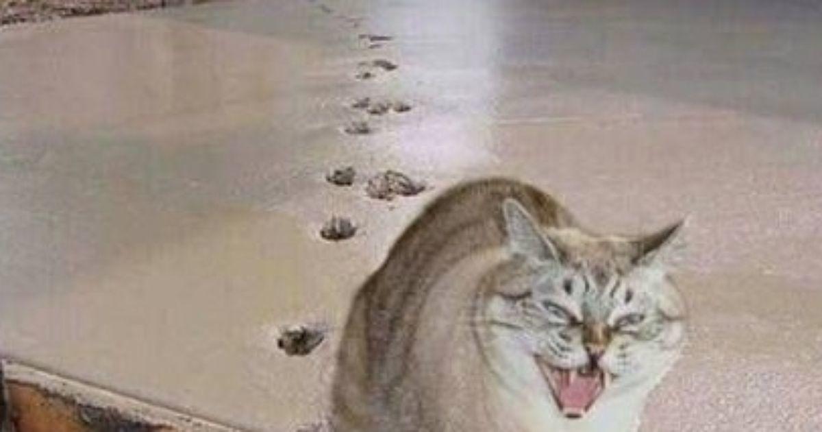 Кот и бетон бетон добавки 64