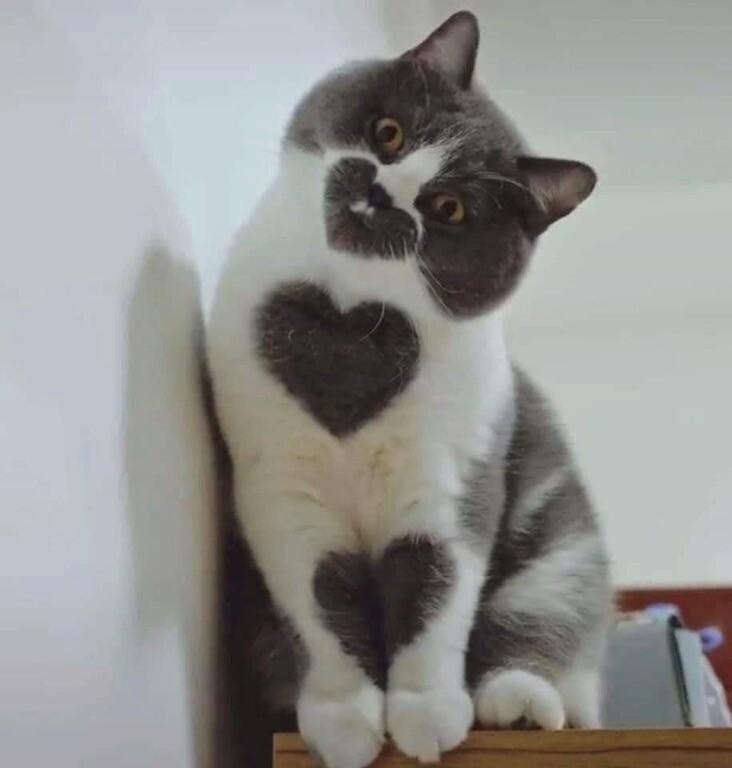 Этот кот любит тебя три раза | Пикабу
